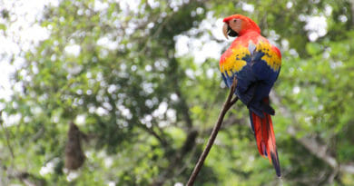 Foto's Honduras