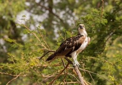 fotoalbum Senegal